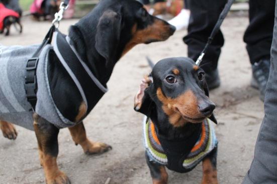 Flipping Dogs Ears Back
